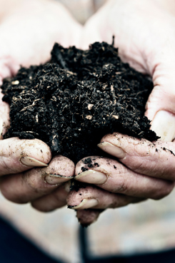 Compost Services_img