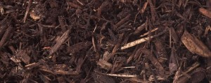 decorative forest mulch for website