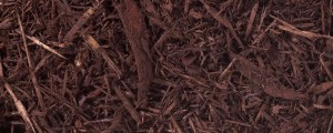 mocha brown mulch for website